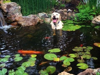 Dog In Water Feature in Colorado