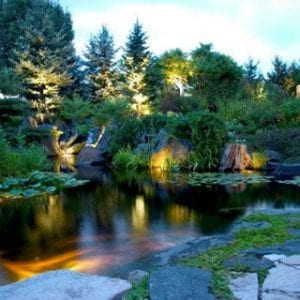 Landscape lighting in and around a backyard koi pond