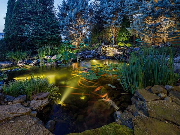Koi fish swimming in a pond at night lit up by LED lights