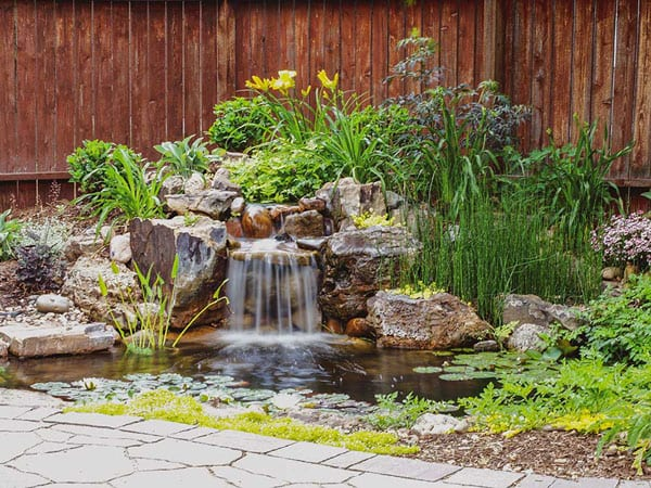 Backyard ecosystem pond with all 5 elements